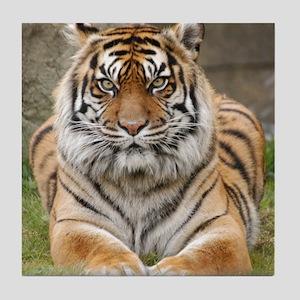 Tiger 6 Square Photo Tile Coaster