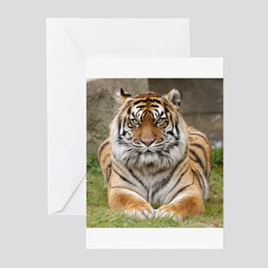 Tiger 6 Square Photo Greeting Cards (Pk of 10)