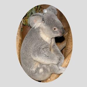 Koala Bear 1 Oval Ornament