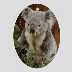 Koala Bear 9 Oval Ornament