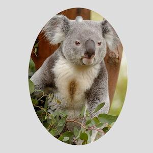 Koala Bear 6 Oval Ornament