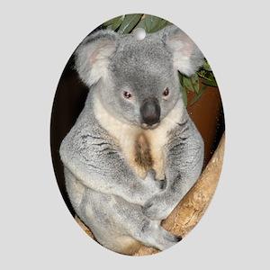 Koala Bear 3 Oval Ornament