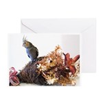 Fall Cockatiel Greeting Cards (Pk of 10)