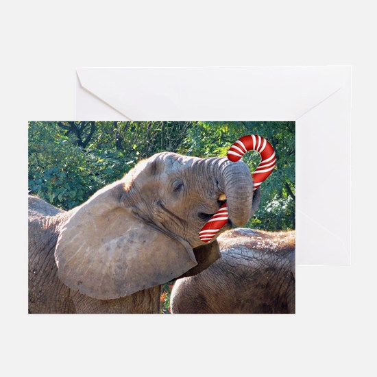 cc Greeting Cards (Pk of 20)