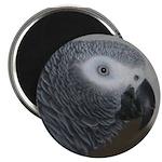 Close-Up Magnet