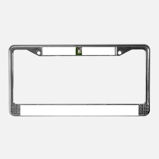 Cute Myanmar License Plate Frame