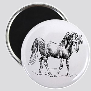 Arabian Drawing Graphite Art Horse Lover Magnet