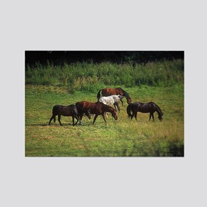 Freedom Spirit Wild Horse Lover Rectangle Magnet