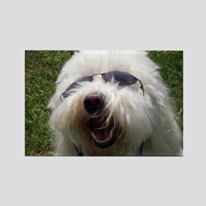 Coton Dog Rectangle Magnet