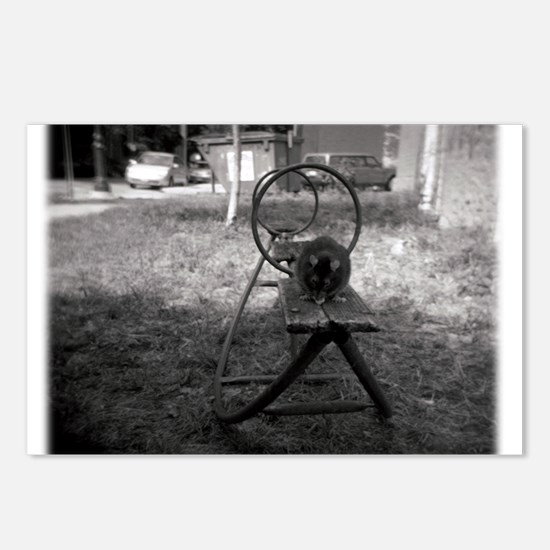 Holga Rat on a See-Saw Postcards (Package of 8)