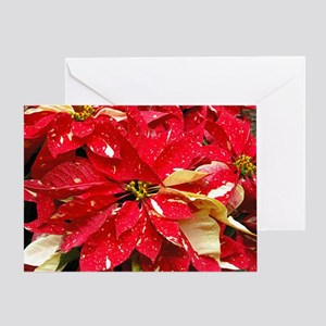 Red & White Poinsettia Greeting Card