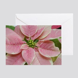 Pink & White Poinsettia Greeting Card
