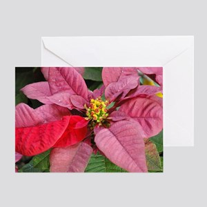 Pink & Red Poinsettia Greeting Card