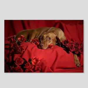 Vizsla Romantic Postcards (Pk of 8)