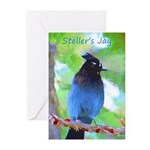 Steller's Jay Greeting Cards (Pk of 20)