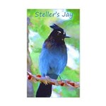 Steller's Jay Sticker (Rectangle)