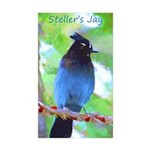 Steller's Jay Sticker (Rectangle 50 pk)