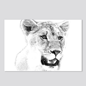 Lions, Postcards (Package of 8)