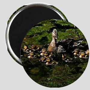 Baby Ducks 2 Magnet