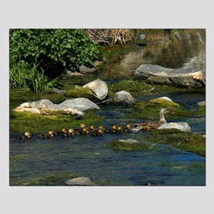 Baby Ducks 1 Small Poster