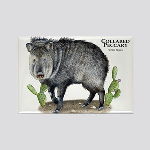 Collared Peccary Rectangle Magnet