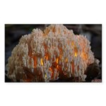 Coral Fungus Rectangle Sticker 10 pk)