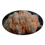 Coral Fungus Oval Sticker (10 pk)
