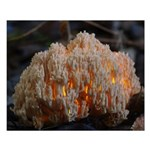 Coral Fungus Small Poster