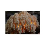 Coral Fungus Rectangle Magnet
