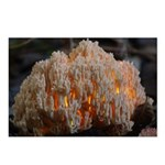 Coral Fungus Postcards (Package of 8)