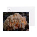 Coral Fungus Greeting Card