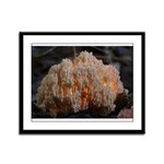 Coral Fungus Framed Panel Print