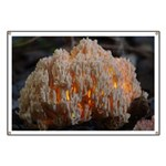 Coral Fungus Banner