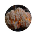 "Coral Fungus 3.5"" Button (100 pack)"