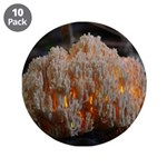 "Coral Fungus 3.5"" Button (10 pack)"
