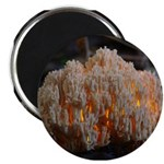 "Coral Fungus 2.25"" Magnet (100 pack)"