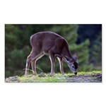 Little Fawn Rectangle Sticker 50 pk)