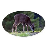 Little Fawn Oval Sticker