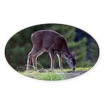 Little Fawn Oval Sticker (10 pk)