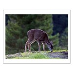 Little Fawn Small Poster