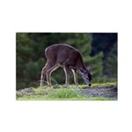 Little Fawn Rectangle Magnet (100 pack)