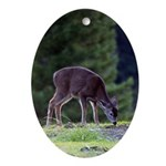 Little Fawn Oval Ornament