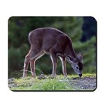 Little Fawn Mousepad