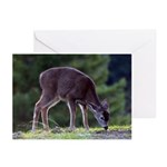 Little Fawn Greeting Cards (Pk of 10)