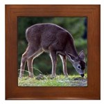 Little Fawn Framed Tile