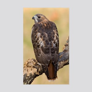 Red Tail Hawk Rectangle Sticker