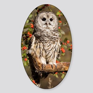 Barred Owl Oval Sticker