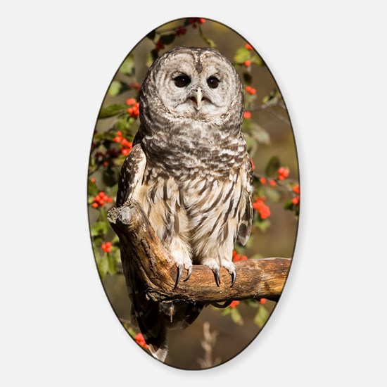 Barred Owl Oval Decal