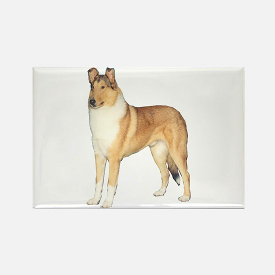 Smooth Collie Gifts Rectangle Magnet (10 pack)