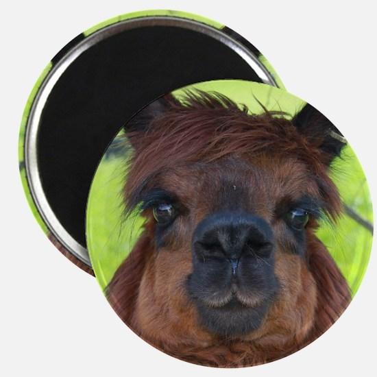 Funny Camelid Magnet